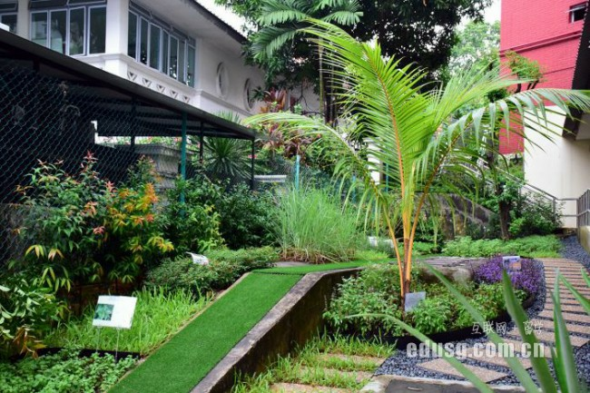 新加坡留学电子签证