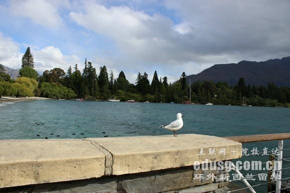 中学生新西兰留学费用